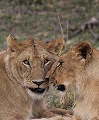 肯尼亞旅游注意事項