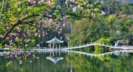 肇庆市星湖旅游景区试行对市民有序开放