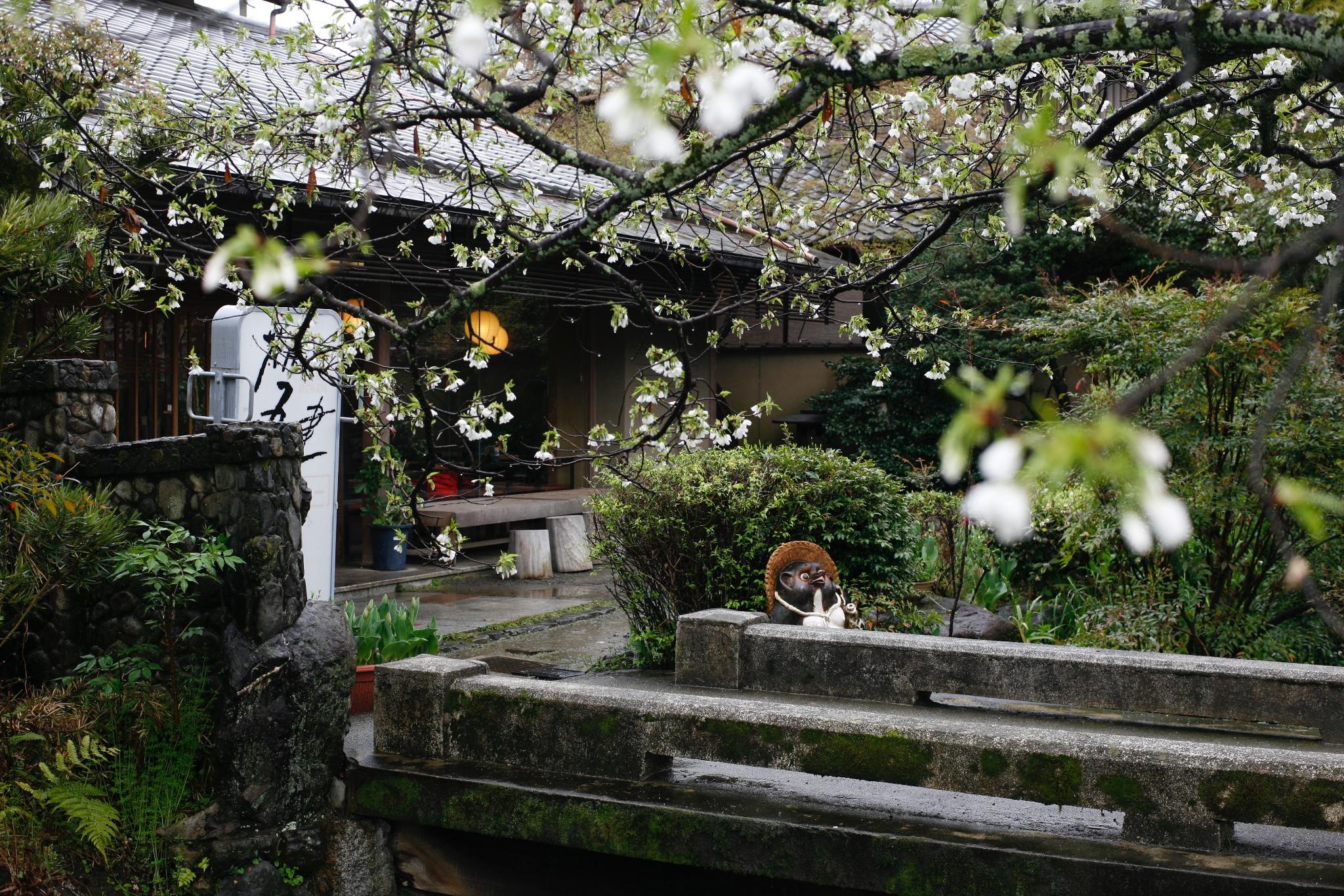 ·花见三城:京都、奈良、名古屋的26处樱花印象_游记