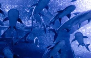 成都娱乐-浩海立方海洋馆
