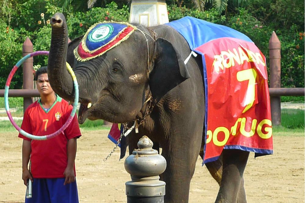 大象是泰国上下奉为神圣的吉祥动物,人人崇敬而又喜爱.