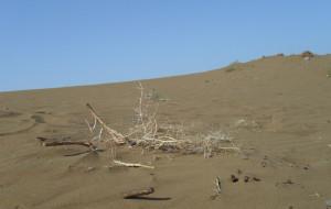 【鄯善图片】徒步沙漠,踏入兰州