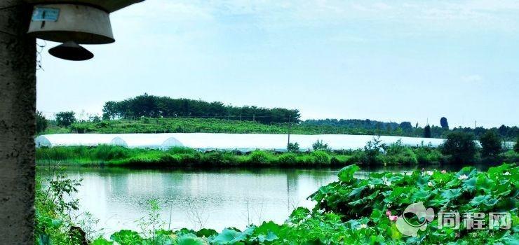 武汉植物园葡萄采摘
