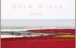 【盘锦图片】面向大海,那一抹红色 【十一使劲跑上篇】〖辽宁-盘锦-红海滩〗