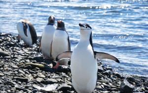 【南极半岛图片】震撼心灵的168小时——追梦南极  造访绝世境地