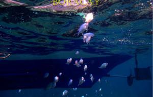长滩岛娱乐-浮潜