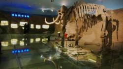 哈尔滨景点-黑龙江省博物馆(老馆)