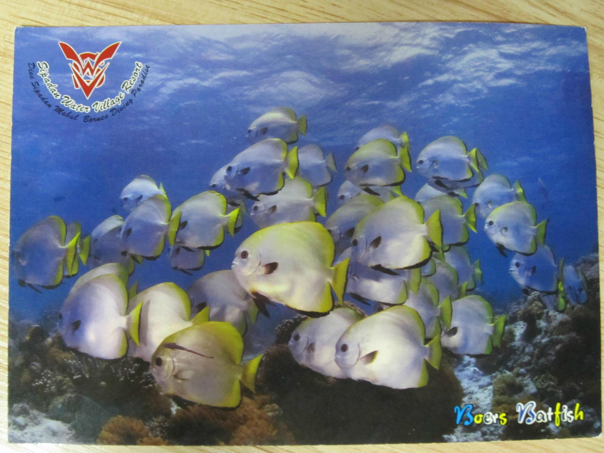壁纸 海底 海底世界 海洋馆 水族馆 油画 2048_1536