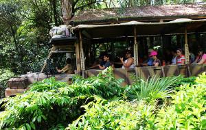 【奥兰多图片】Safari模式的奥兰多迪斯尼动物王国