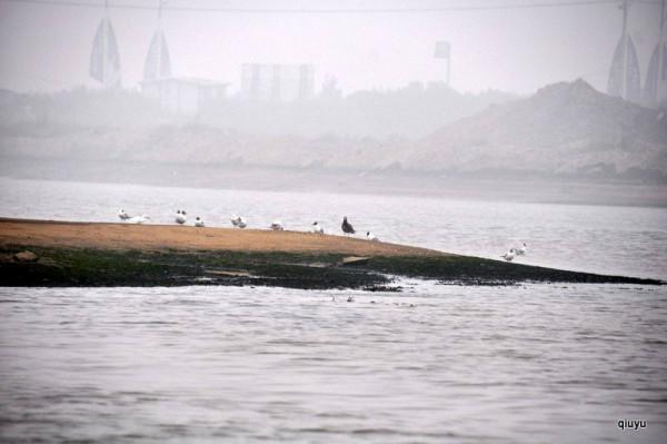 海鸟和锚_东戴河——止锚湾5日自助游攻略,止锚湾自助游攻略 - 马蜂窝