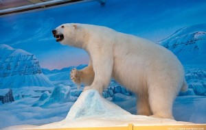 【北极图片】北极之旅-斯瓦尔巴德群岛-探索冰冻星球(雪地摩托车、寻找北极熊、实用信息)