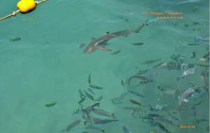 兰卡威娱乐-芭雅岛海洋公园(浮潜)