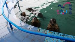 长岛景点-月牙湾海豹苑