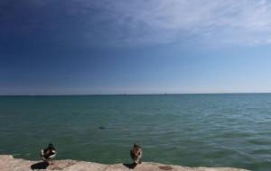 【芝加哥图片】芝加哥市区,在全球最干净的十大城市中,排名第二。