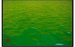 【龚滩古镇图片】湮没在水下的古镇——龚滩古镇2013
