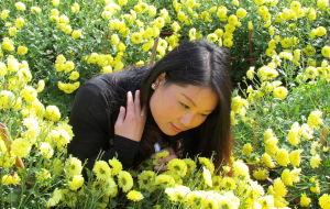 【宜春图片】明月山采菊