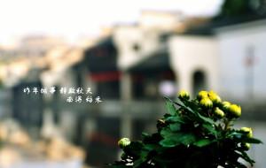 【湖州图片】昨年城事 静数秋天(瓶里南浔时光)