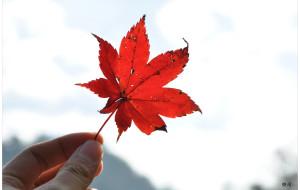 【大明山图片】临安大明山~秋の红叶-行摄游