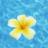 阳光下的づ一朵花