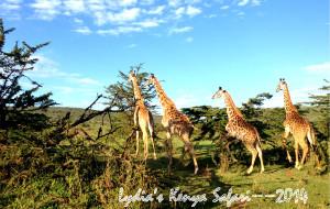 【马赛马拉国家公园图片】Lydia的狂野假期:2014走进非洲之KENYA SAFARI