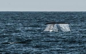 斯里兰卡娱乐-出海观鲸