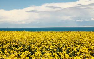 【甘肃图片】青海-----那绿那山那些在路上的日子