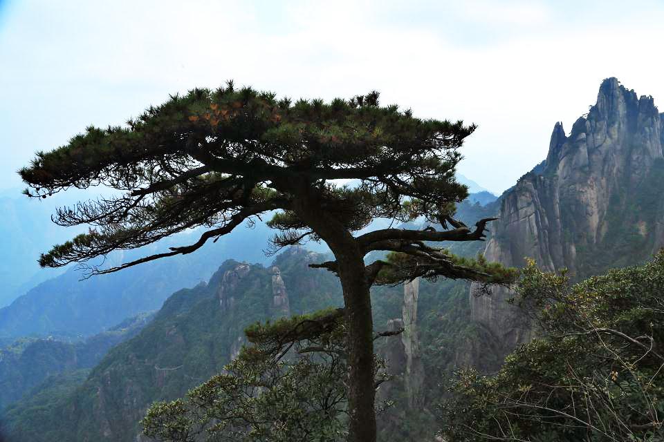 高山树风景图片