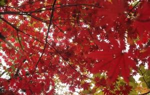 【凤城图片】就让秋风带走我的思念,带走我的心。。。。。(辽宁省 凤城市 凤凰山 枫叶)