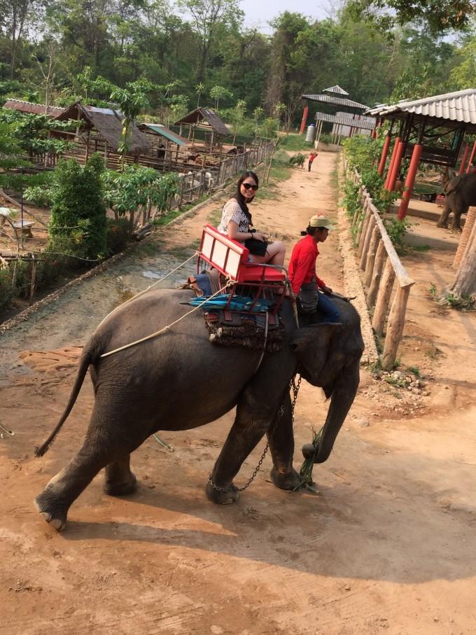 买了香蕉的话,路上可以喂大象,好可爱,大象都会听中文哈哈~  只要说