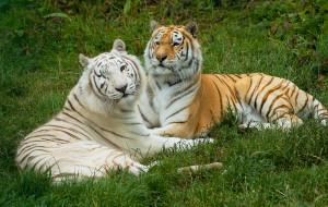 英国娱乐-怀特岛动物园
