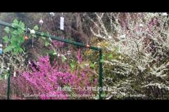 #花样游记大赛#后青春期的诗,武汉木兰天池