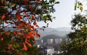 【洛阳图片】满山红叶正当时