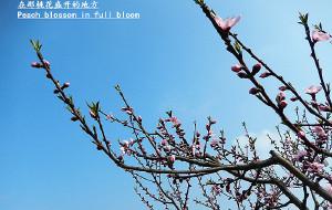 【龙泉图片】#花样游记大赛#在那桃花盛开的地方
