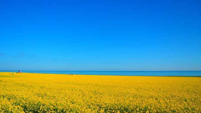 还有件事:青海的高速公路很可爱,不仅没有护栏,还设了很多u型开口