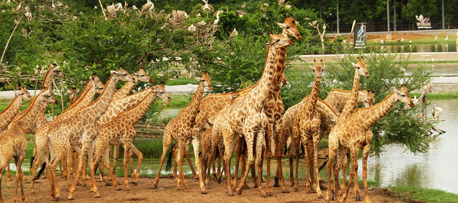 曼谷 野生动物园电子票(3分钟出票)