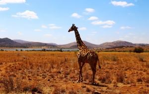 【好望角自然保护区图片】彩虹之国-#南非# South Africa一定会再去的美丽国度~