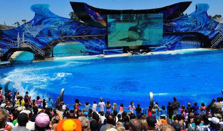 【世界最大】圣地亚哥 海洋世界门票(扫码入园,可升级