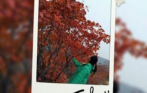 【巩义图片】2016年11月初,带妈咪自驾长寿山赏红叶~