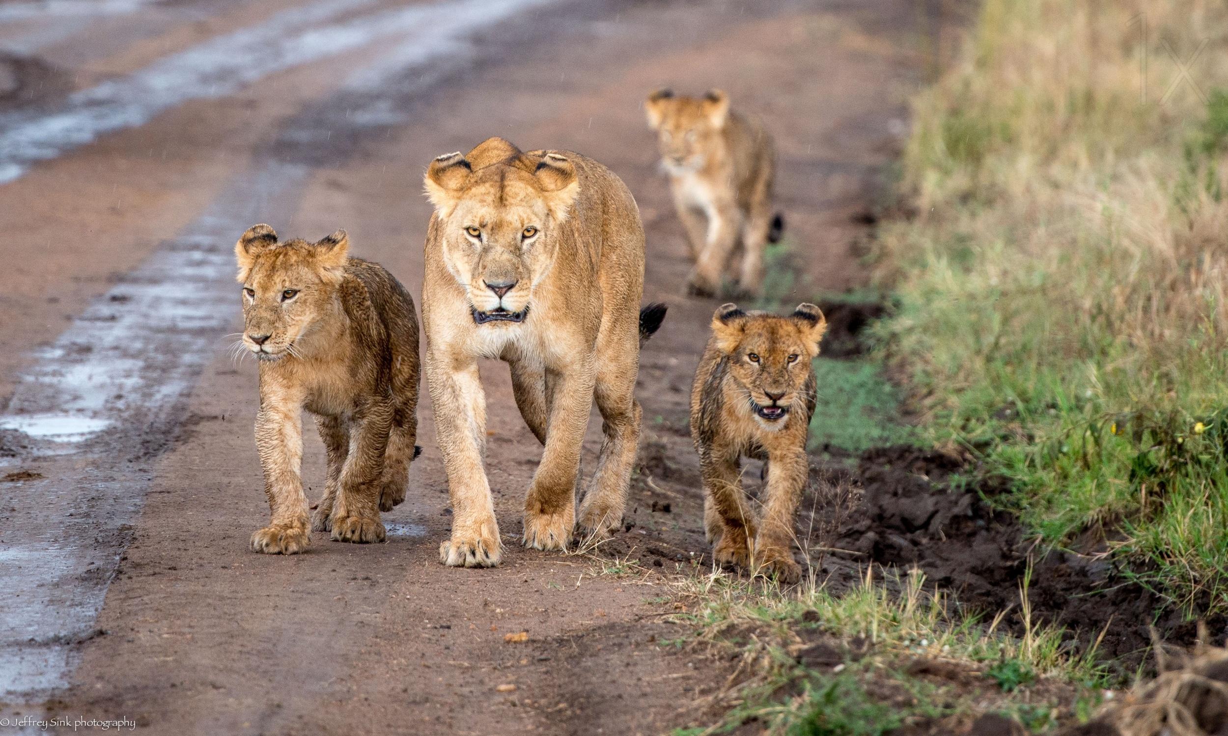八达岭野生动物世界是中国较大的野生动物繁育基地之一,现已繁殖非洲