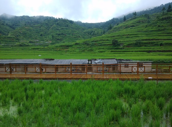 人,因地制宜在稻田里养了鱼、虾、青蛙、鸭子,完美的生态圈.   逐