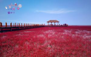 【兴城图片】【辽宁印象】一路向北·遇见红与蓝的世界(兴城海滨浴场—笔架山—红海滩)