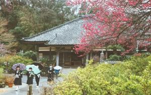 【东京图片】[蜂首游记]樱花树下——漫步在伊豆和关西(含春节伊豆赏早樱和京都、奈良、大阪、神户、有马、姬路)