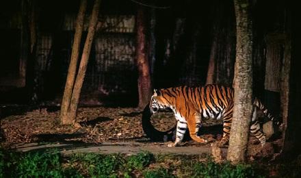 【经典必玩】新加坡 夜间野生动物园门票(送园内观光电车)【电子换票