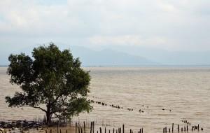 【深圳图片】漫步海滨---深圳湾