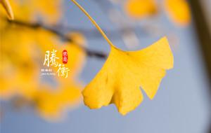 【和顺图片】【寻秋之旅上篇】醉人腾冲银杏秋色