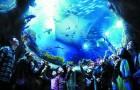 香港 海洋公园门票+市区去程巴士(含园内缆车)