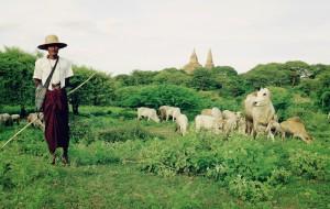 【喀纳斯图片】我曾孤单如飞鸟,看过这世界的喧嚣