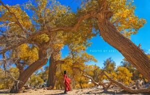 【巴丹吉林图片】【额济纳旗】三千年的守望,徒步穿越那片金色的胡杨林(银川-额济纳自驾)