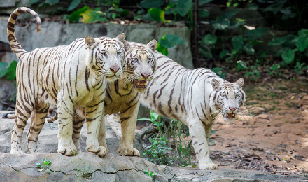 【明星乐园】广州长隆野生动物世界门票