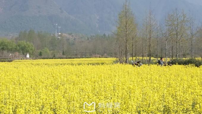 黄山卢村风景色彩